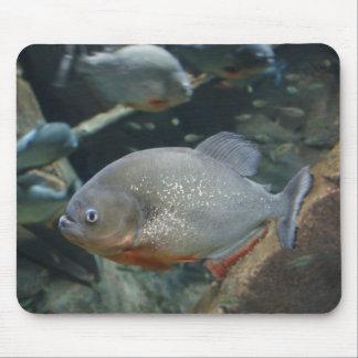 Piranha fish swimming color photograph mouse pad