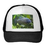 piranha mesh hat