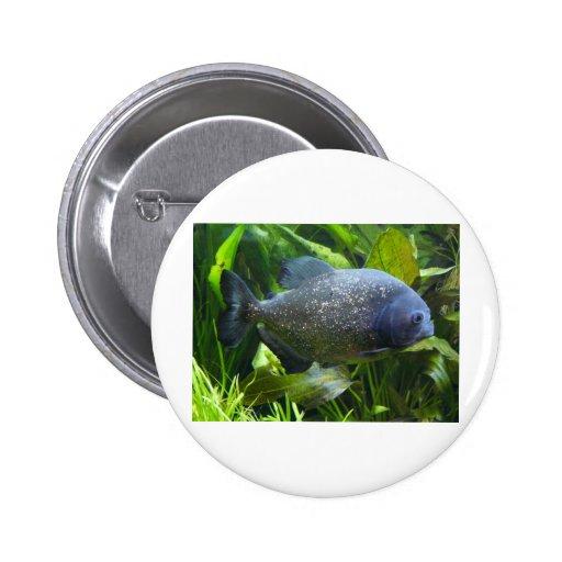 piranha pinback buttons