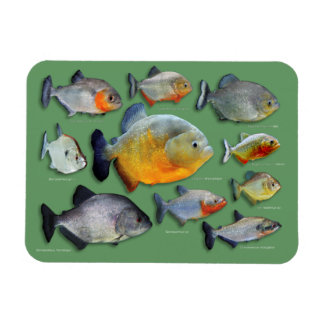 Piranhas Rectangular Photo Magnet