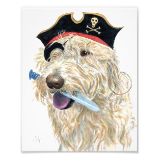 Pirate Cream Labradoodle Photo Print