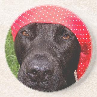 Pirate dog, black lab, red hankerchief green grass drink coaster