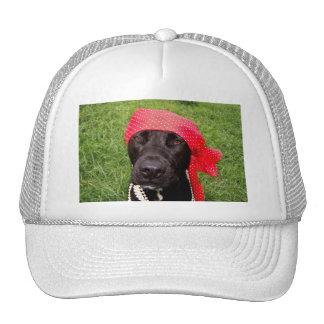 Pirate dog, black lab, red hankerchief green grass hat