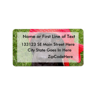 Pirate dog, black lab, red hankerchief green grass address label