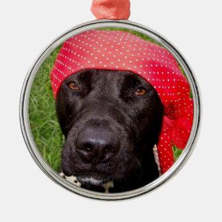 Pirate dog, black lab, red hankerchief green grass ornaments
