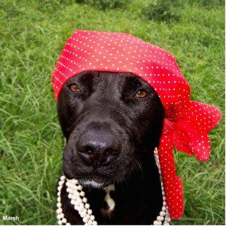 Pirate dog, black lab, red hankerchief green grass photo cutout