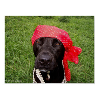Pirate dog, black lab, red hankerchief green grass poster