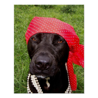 Pirate dog, black lab, red hankerchief green grass posters