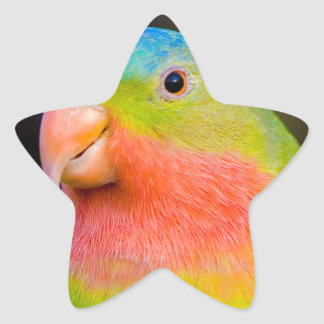 pirate parrot star sticker