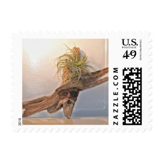 Pirate With Air Plant Postage