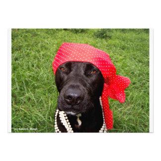 Piratee el perro laboratorio negro hierba verde comunicados