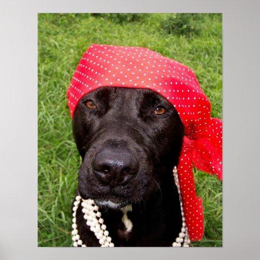 Piratee el perro, laboratorio negro, hierba verde  poster