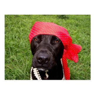 Piratee el perro, laboratorio negro, hierba verde postal