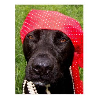 Piratee el perro, laboratorio negro, hierba verde postales