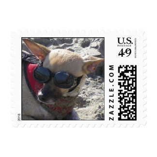 Piruli, our Chihuhua - a day at the beach Postage Stamp