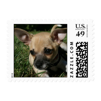 Piruli, our Chihuhua - a day at the park Postage