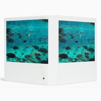 Piscina azul de los cichlids que nadan alrededor d