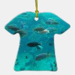 Piscina azul de los cichlids que nadan alrededor d ornato