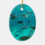 Piscina azul de los cichlids que nadan alrededor d adorno para reyes