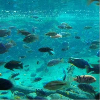 Piscina azul de los cichlids que nadan alrededor d esculturas fotograficas