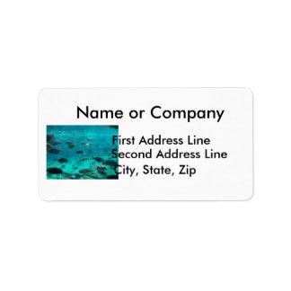 Piscina azul de los cichlids que nadan alrededor d etiqueta de dirección