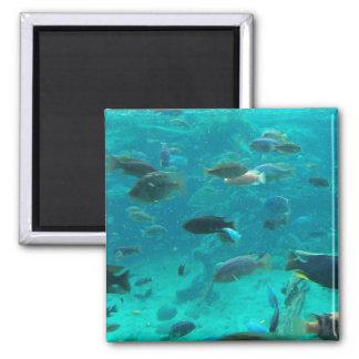 Piscina azul de los cichlids que nadan alrededor d imán de frigorífico