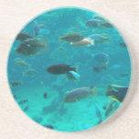 Piscina azul de los cichlids que nadan alrededor d posavasos manualidades