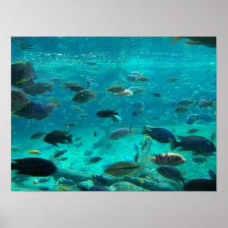 Piscina azul de los cichlids que nadan alrededor d póster