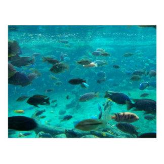 Piscina azul de los cichlids que nadan alrededor d tarjetas postales