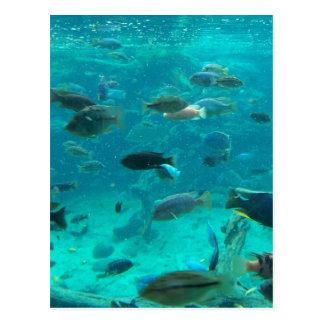 Piscina azul de los cichlids que nadan alrededor d tarjeta postal