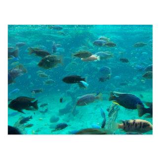 Piscina azul de los cichlids que nadan alrededor d postal