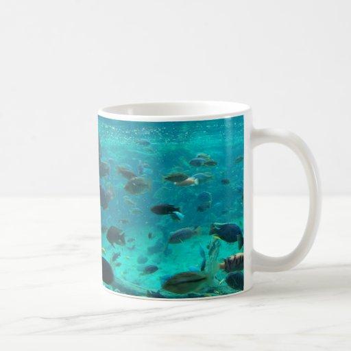 Piscina azul de los cichlids que nadan alrededor d taza de café