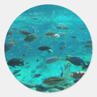 Piscina azul de los cichlids que nadan alrededor pegatina redonda