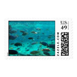 Piscina azul de los cichlids que nadan alrededor franqueo