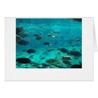 Piscina azul de los cichlids que nadan alrededor tarjeta de felicitación