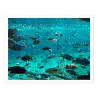 Piscina azul de los cichlids que nadan alrededor postal