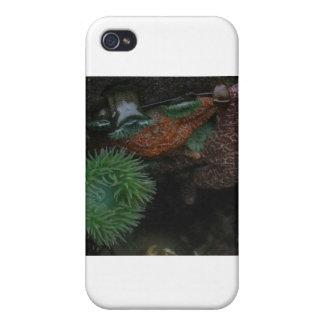 Piscina de la marea iPhone 4/4S carcasa