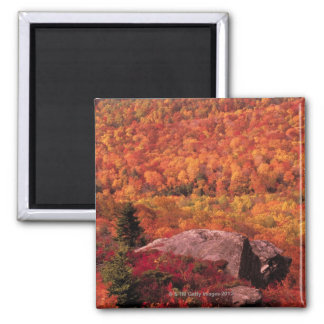 Pisgah National Forest from Blue Ridge Parkway Refrigerator Magnets