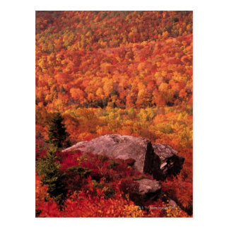 Pisgah National Forest from Blue Ridge Parkway , Postcard