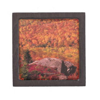 Pisgah National Forest from Blue Ridge Parkway , Premium Trinket Box