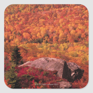Pisgah National Forest from Blue Ridge Parkway , Square Sticker