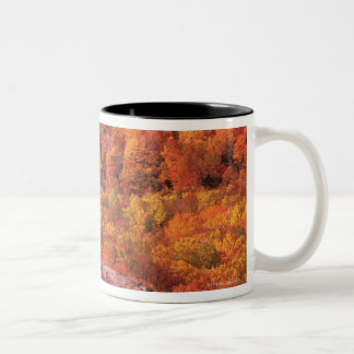 Pisgah National Forest from Blue Ridge Parkway , Two-Tone Coffee Mug