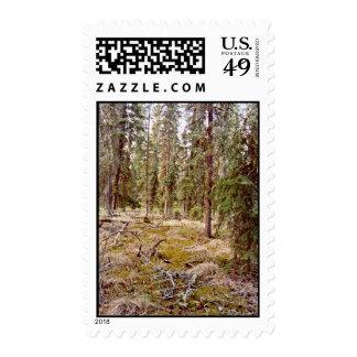 Piso boreal del bosque sellos