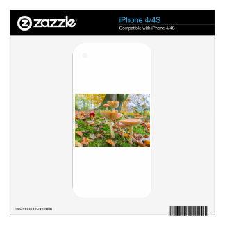 Piso del bosque con agáricos y hojas de mosca en iPhone 4S calcomanía