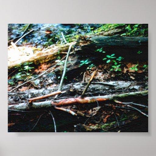 Piso del bosque póster