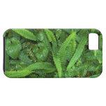 Piso del bosque, selva tropical de Quinault, NP iPhone 5 Fundas