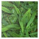 Piso del bosque, selva tropical de Quinault, NP ol Teja Ceramica