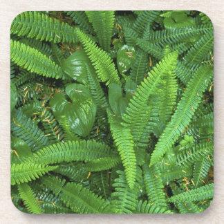 Piso del bosque, selva tropical de Quinault, NP ol Posavasos
