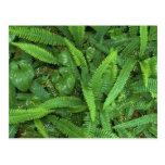 Piso del bosque, selva tropical de Quinault, NP ol Tarjetas Postales