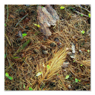 Piso-Pinecones de maderas, etc. Poster